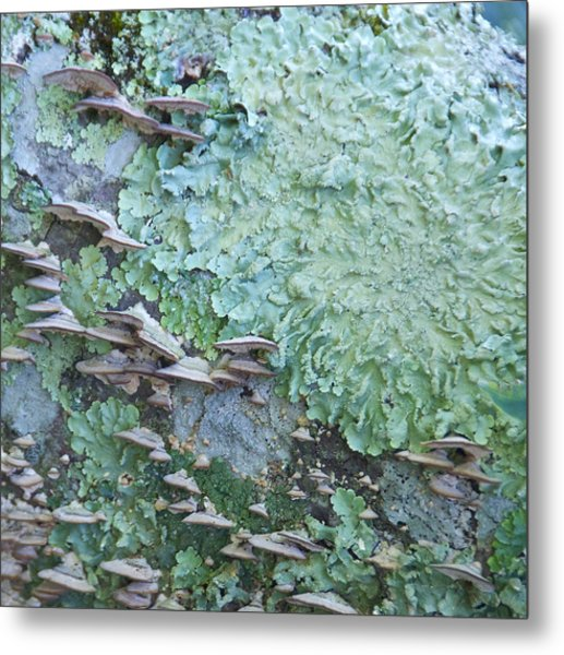 Green Mossy Fungus Party Metal Print