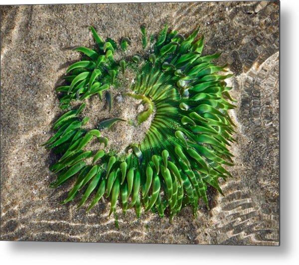 Green Sea Anemone Metal Print