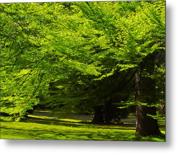 Green Trees In Stanley Park Metal Print