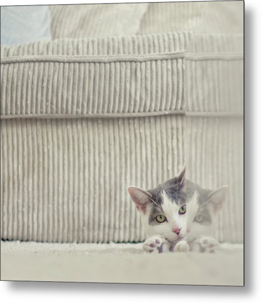Grey And White Cat Peeking Around Corner Metal Print