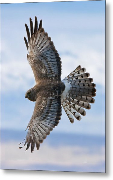 Grey Ghost Flight Metal Print