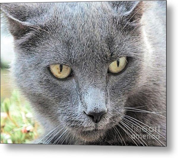 Grey Kitty 2 Metal Print