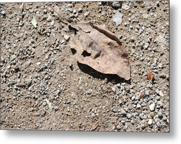 Grey Leaf On Ground Metal Print