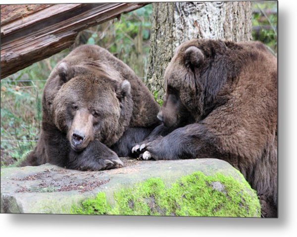 Grizzley - 0001 Metal Print by S and S Photo