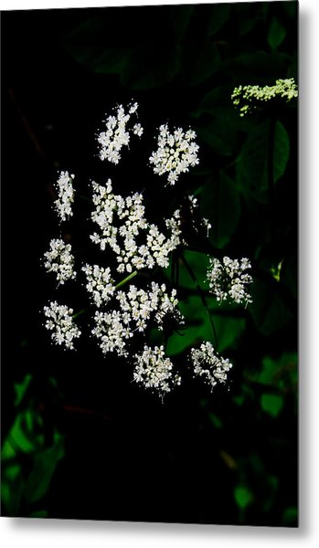 Ground-elder Metal Print