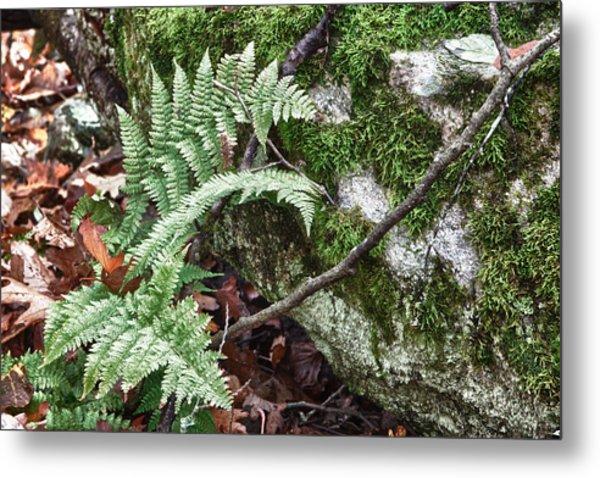 Ground Foliage Near Mountain Lake Metal Print