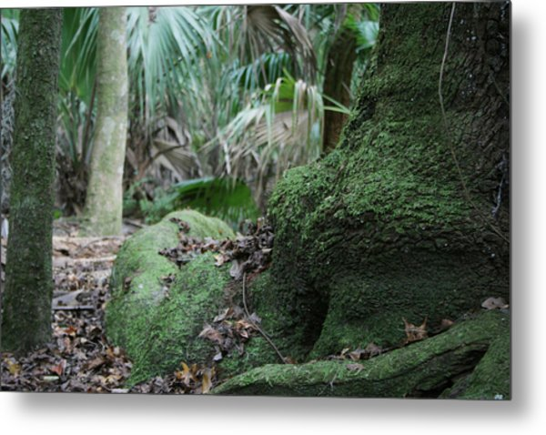 Grounded Metal Print by Sean Green