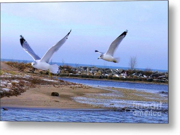 Gulls In Flight 2 Metal Print