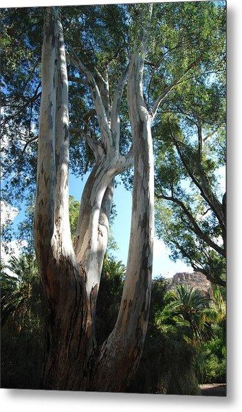 Gum Trees Metal Print