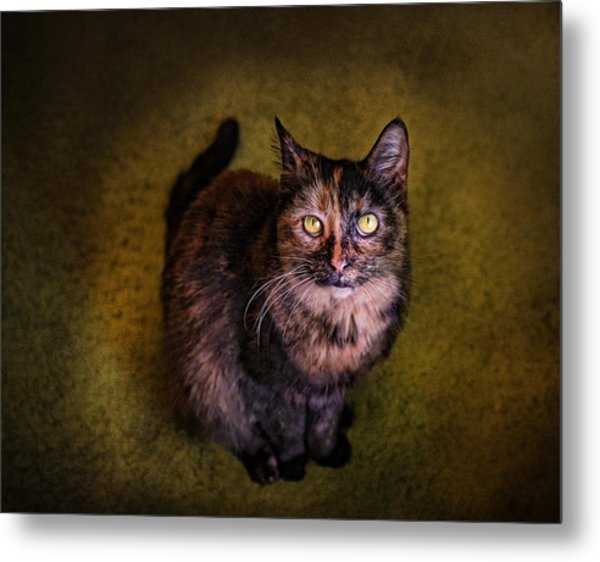 Haley Joel Metal Print