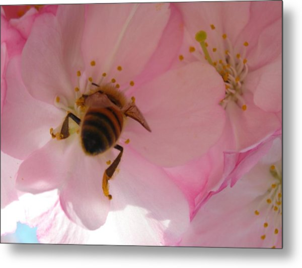Hangin' With The Honey Bee Metal Print by Stacy Lanyon