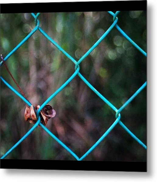 Hanging To The Fence, By My Lens Metal Print