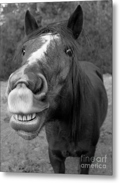 Happy Horse Metal Print by Christean Ramage
