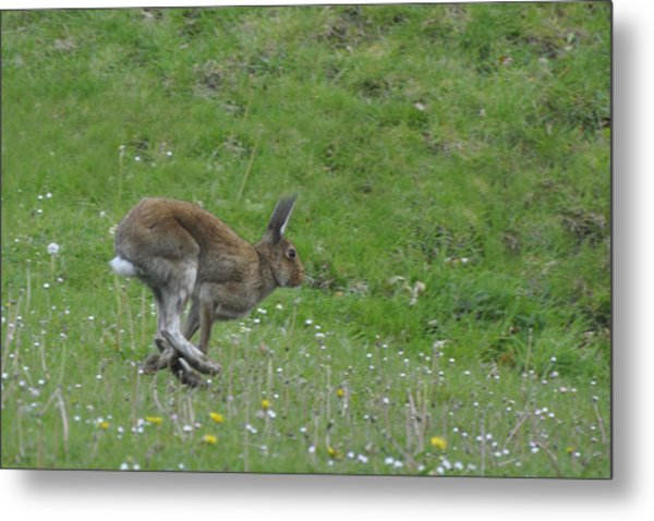 Hare I Come Metal Print
