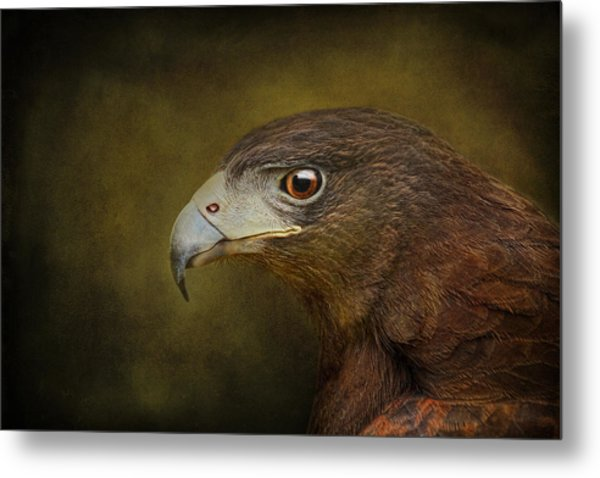 Harris Hawk Profile Metal Print