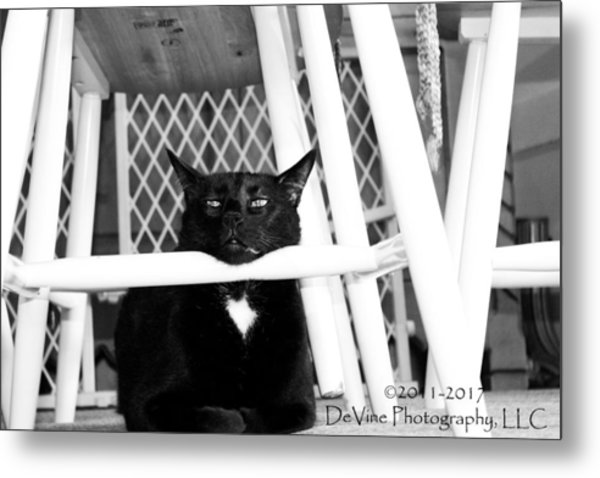 Harry One Twisted Cat Metal Print by Stephani JeauxDeVine