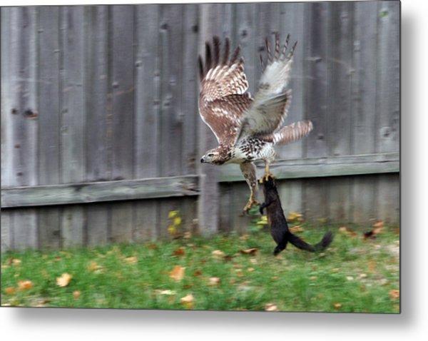 Hawk The Hunter Metal Print