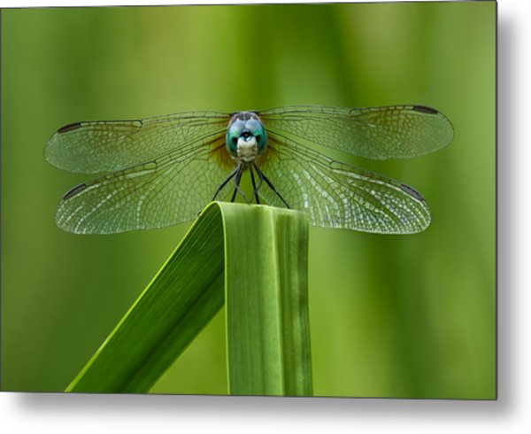 Head On Dragonfly Metal Print