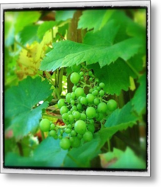 Heard It Through The Grapevine #grapes Metal Print