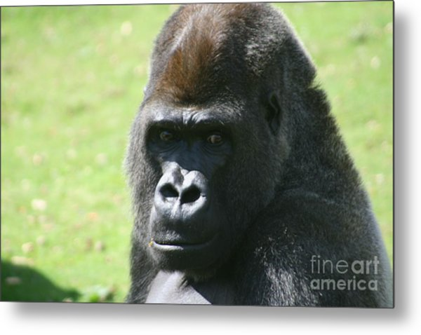 Here's Looking At You Metal Print by Carol Wright
