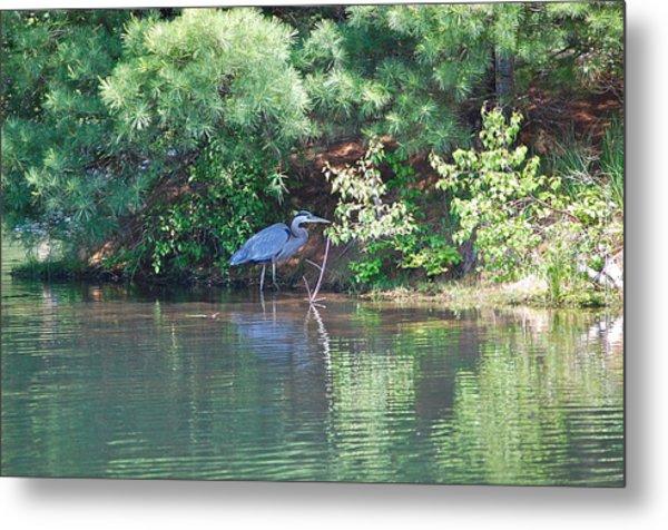 Heron Under Pines Metal Print