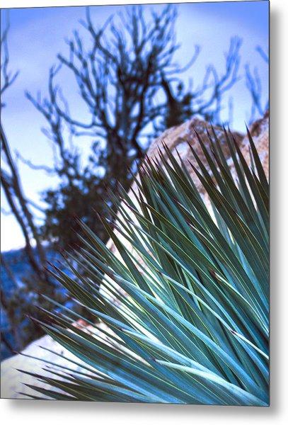 High Desert Cactus Metal Print by Jeffery Reynolds