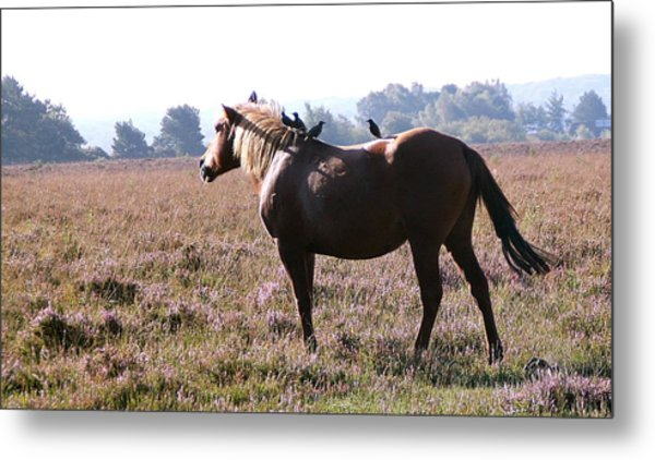 Hitching A Ride Metal Print by Karen Grist