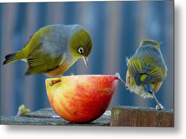 Holding The Apple Up Metal Print by Andrea Lightfoot