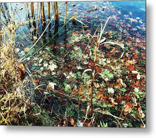 Homage To Monet Metal Print by Todd Sherlock