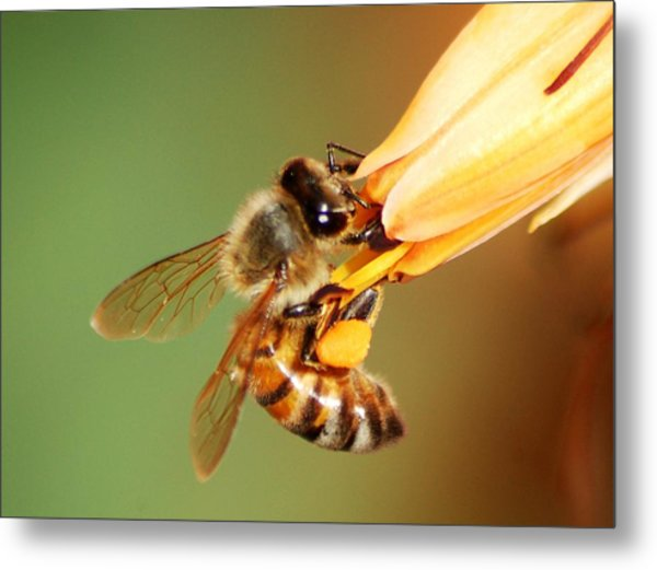 Hooked Bee Metal Print by Meeli Sonn