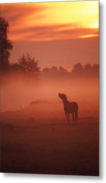 Horse At Sunrise Metal Print