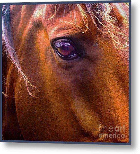 Horse Eyes Metal Print