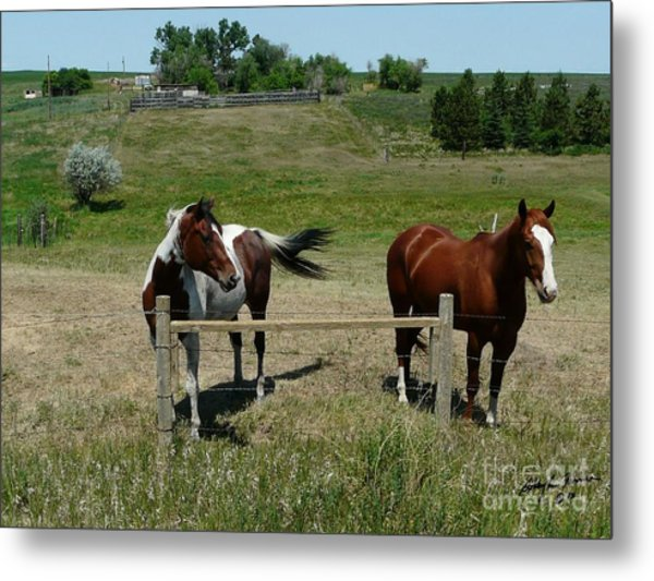 Horse On A Warm Day Metal Print by Bobbylee Farrier