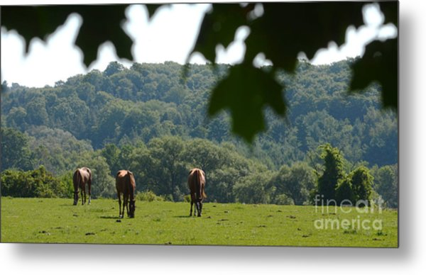 Horses And Summer Breeze Metal Print