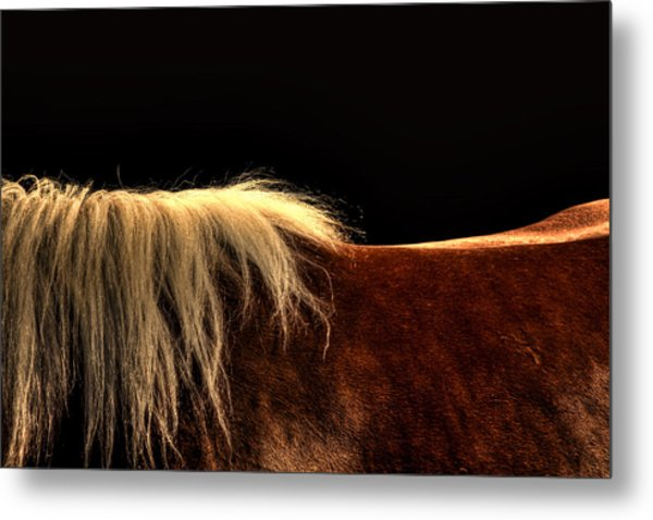 Horses Back Metal Print by Gary Smith