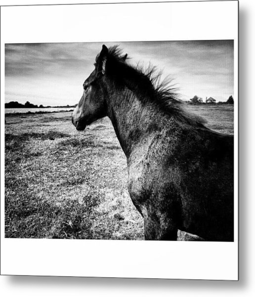 #horses #horse #pony #ponies #foal Metal Print by Little Images