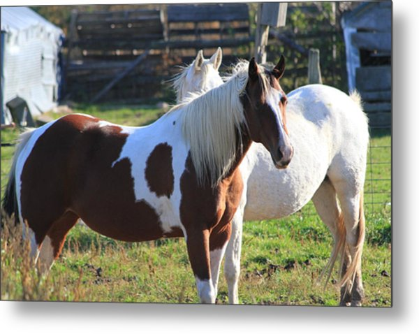Horses Metal Print by Mike Stouffer