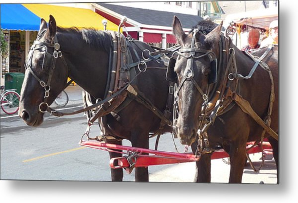 Horses Of Mackinac Metal Print by Michael Carrothers