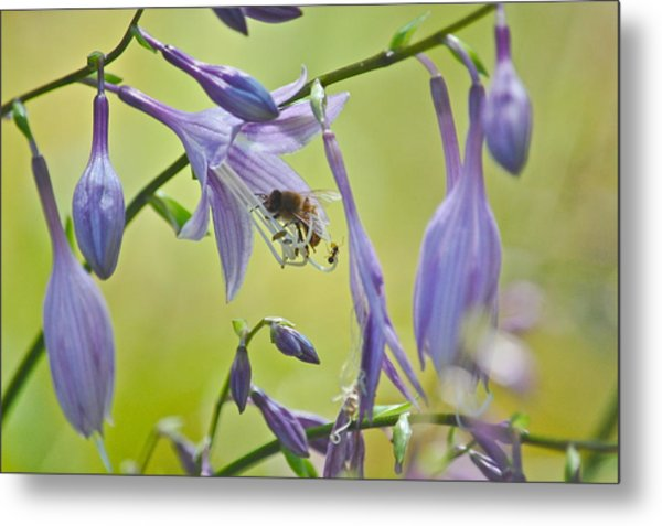 Hosta Blossom-bee-ant Metal Print