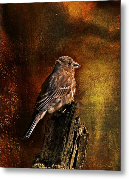 House Finch With Sunflower Seed Metal Print