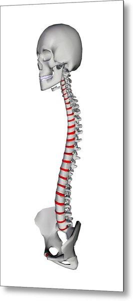 Human Backbone, Artwork Metal Print by Friedrich Saurer