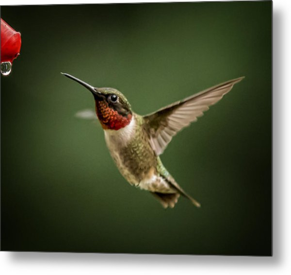Hummer In The Garden One Metal Print by Michael Putnam