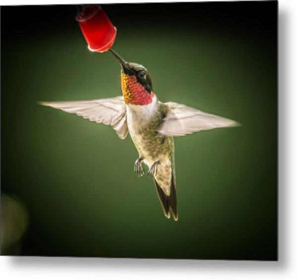 Hummers In The Garden Four Metal Print by Michael Putnam
