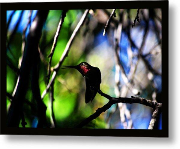 Hummingbird Resting On A Twig Metal Print