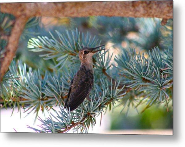 Hummingbird's First Flight Metal Print