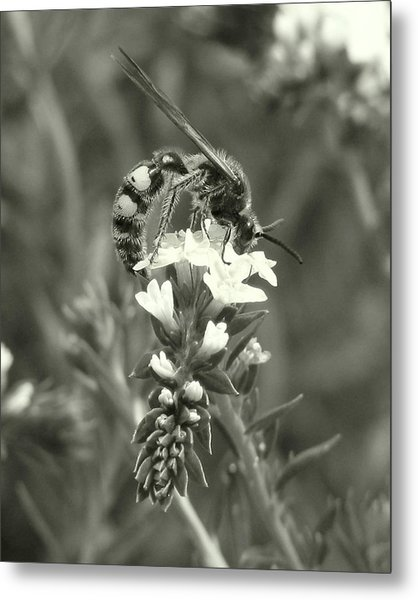 Hunter Wasp On Heliotrope Metal Print