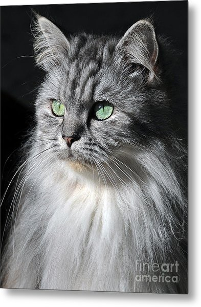 I Am Not Amused Metal Print by Graham Taylor