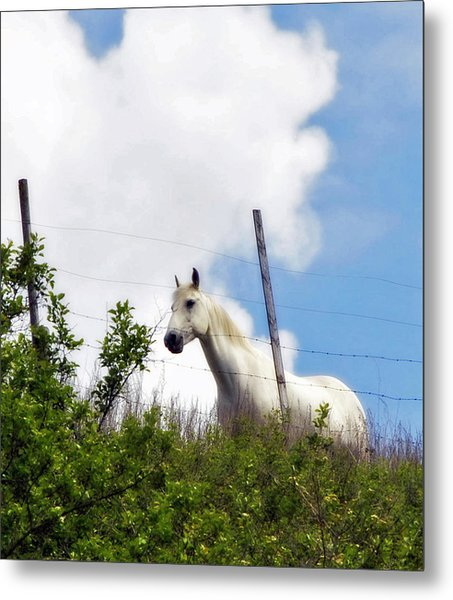 I Dreamt Of A White Horse Metal Print