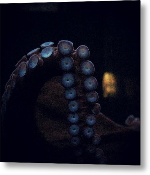 I Thought This Looked Great! #octopus Metal Print