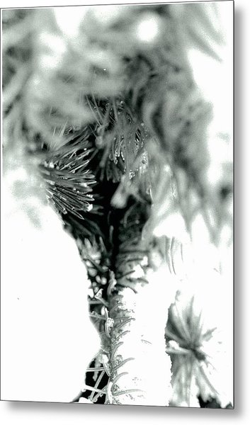 Iced Needles Buried In Snow Metal Print by Suzanne Fenster